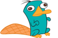 So adorable! - perry-the-platypus photo