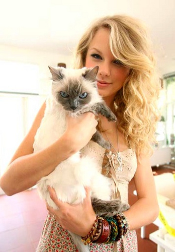 Taylor Swift's cat, Indie - taylor-swift Photo