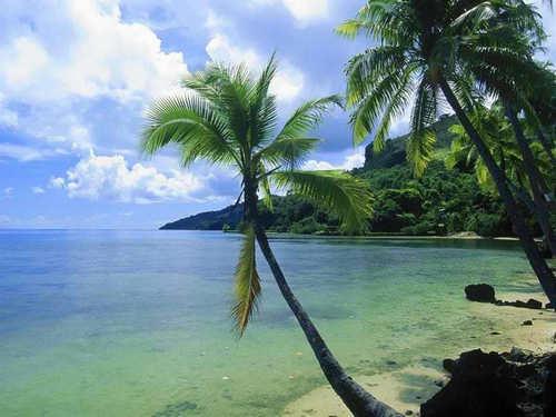 Tropical Bilder