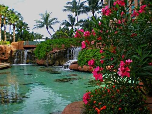 Tropical larawan