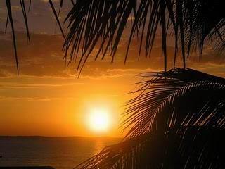 Tropical imágenes