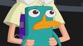 Uh Oh - perry-the-platypus photo