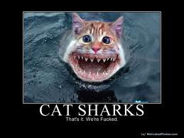 cat shark.... very dangerous,, loves meow mix