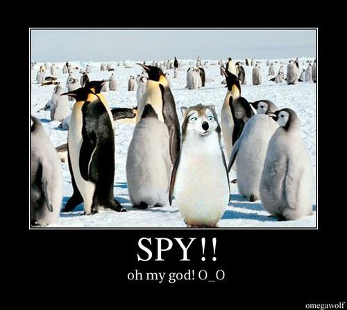 spy!!