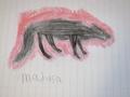 wolf i drew