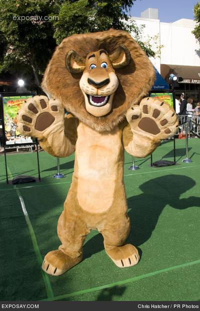 alex the lion images alex the lion wallpaper and