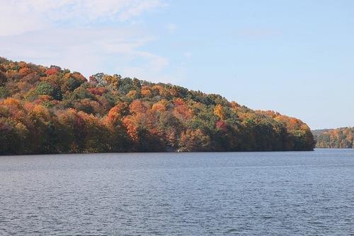 Autumn painted leaves