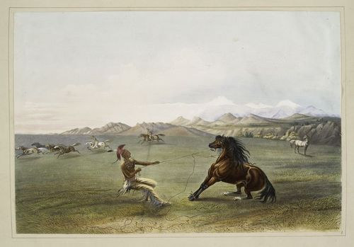 Catching a wild horse 1845