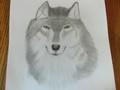 First lobo