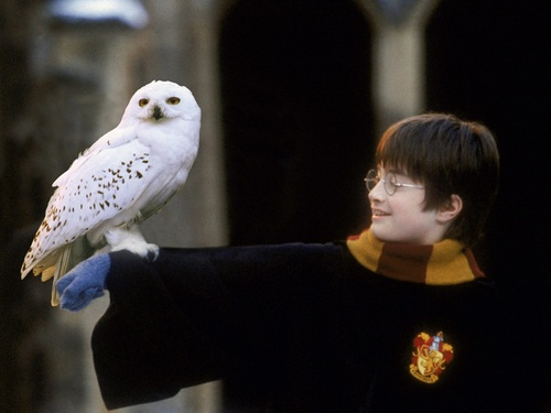 Harry Potter wallpaper containing a peregrine entitled Harry Potter Wallpaper