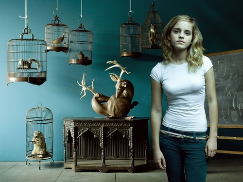 hermione granger wallpaper called Hermione Granger wallpaper