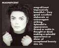 Magnificent Michael - michael-jackson photo