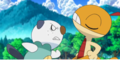 Oshawott is very angry  at scraggy