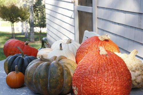 Pumpkins, Gourds and Winter Squash