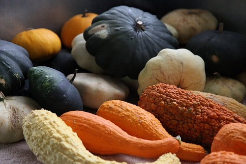 Pumpkins, Gourds and Winter Squash