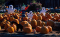 Pumpkins, Pumpkins Everywhere - halloween wallpaper