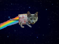 Real Life Nyan Cat