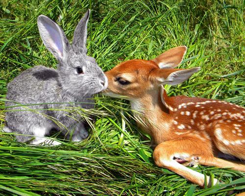 Real-life Bambi and Thumper