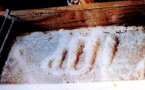 nama of Allah on bee hive miracle