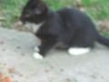 My Kitten Mittens