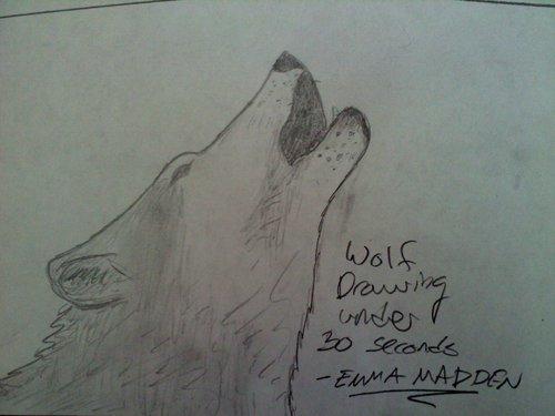 chó sói, sói drawing under 30 giây