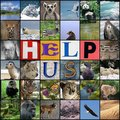 help us - the-nature-conservancy photo