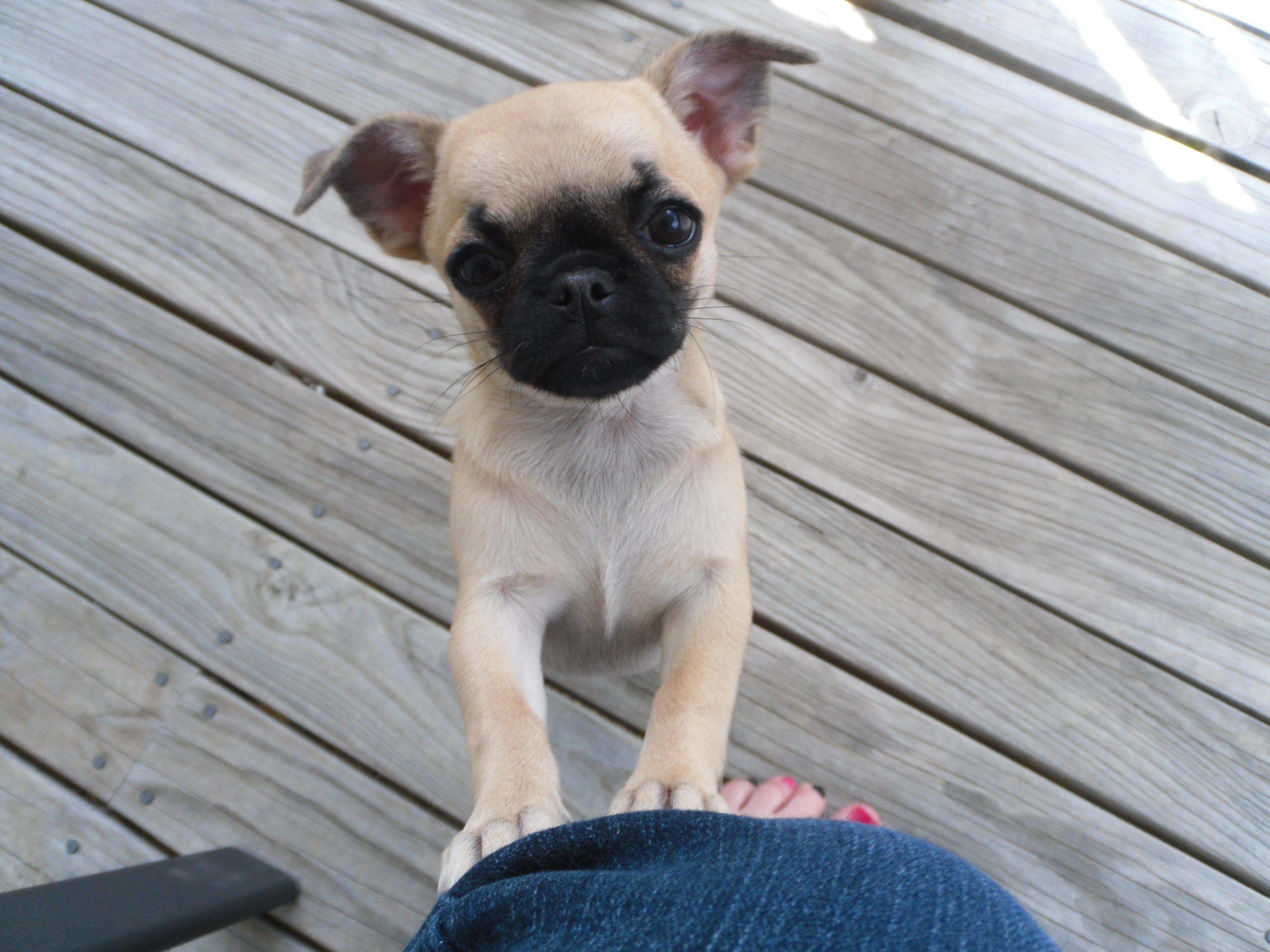 Beaglemation - photo#16