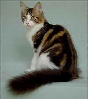 Cat With Orange White And Black Fur