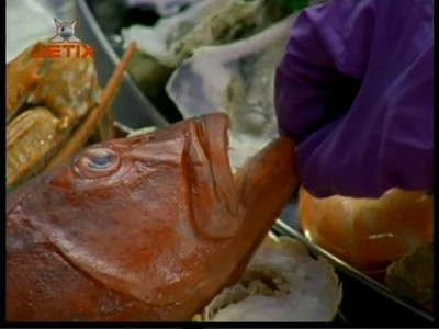 Who touches this fish?