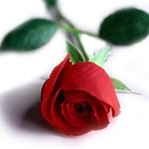 "Which group sang the song ""I'll pick a rose for my rose"" ?"