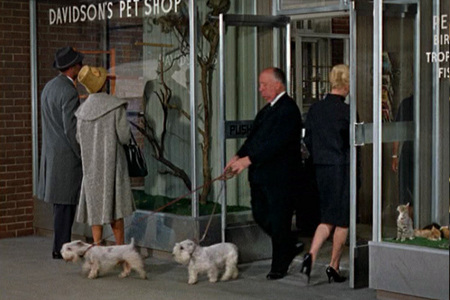 "In the classic film ""The Birds""...what type of birds does Melanie buy from the pet shop ?"