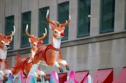 who is front reindeer ?