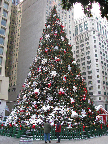 where is the place christmas tree in ?