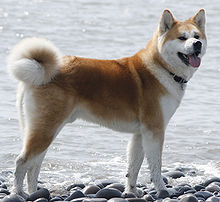 Akita is the national dog of...