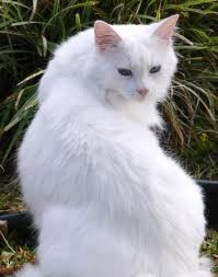 Who killed Whitestorm during the battle between the Clancats and BloodClan?