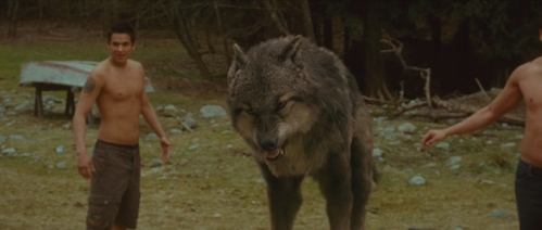 Which wolf is this?