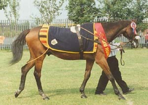 When did Red Rum win the Scottish National?