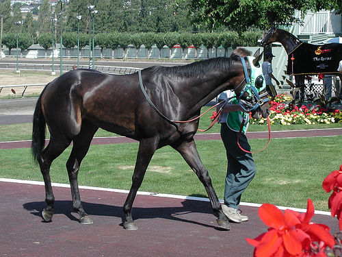 """RACING TERMS:A black horse is led past you. The person beside anda calls it a """"sophomore"""". What does he mean sejak that?"""