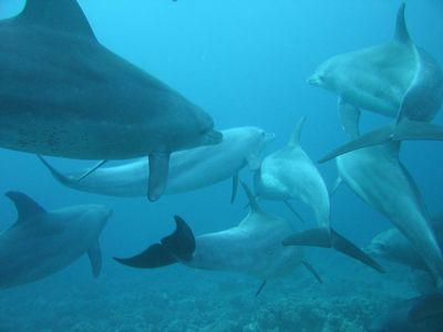 True or False: Dolphins never sleep.
