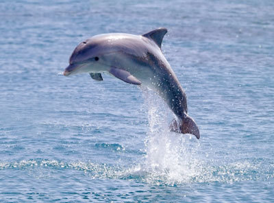 How long ago did dolphins appear for the first time?