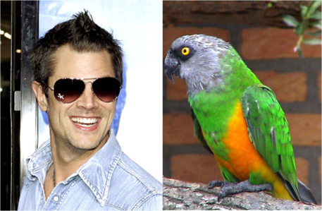 What does Johnny say to the parrot that swears at him in Jackass?