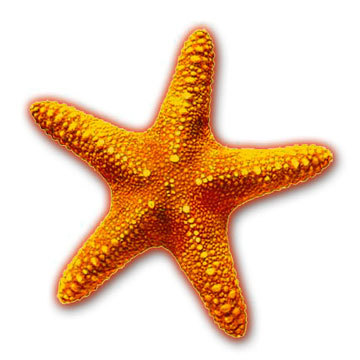 T/F : Starfish don't have brains ?