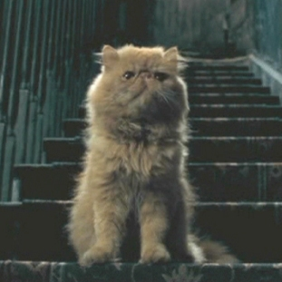 What is the name of Hermione's cat???