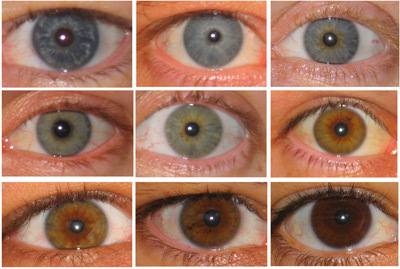 What color is the king's eyes?