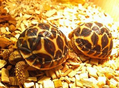 what is choi jonghun tartaruga name?