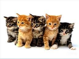 If a kittens mother is gone what would you do to take care of it as much?