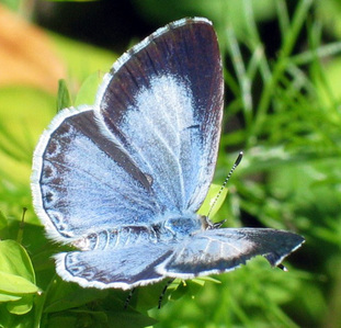 What kind of butterfly, kipepeo is this?