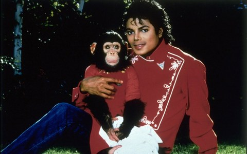 what is the michael's monkey name?