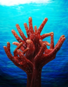 This hand painting was inspired by corals.