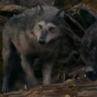 Which werewolf is this?